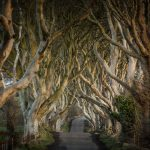 Game of Thrones® - The Dark Hedges~The Kingsroad